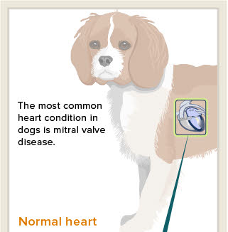 Mitral Valve Disease in Dogs and Cats - Veterinary Partner - VIN