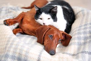 Congestive Heart Failure in Dogs and Cats - Veterinary Partner - VIN