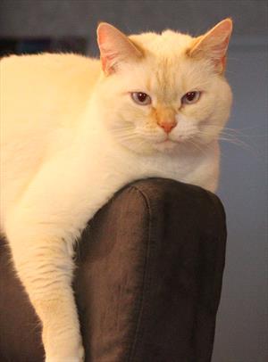 Vaccine Associated Fibrosarcoma in Cats - Veterinary Partner
