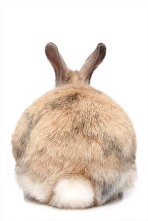 Frontline Is Toxic To Rabbits Veterinary Partner Vin
