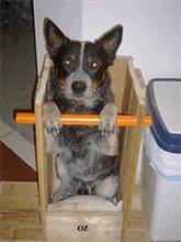 handler mégaœsophage canin