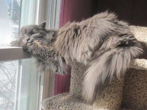 Hairballs in Cats - Veterinary Partner - VIN