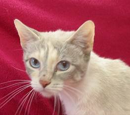 Itching and Allergy in Cats - Veterinary Partner - VIN